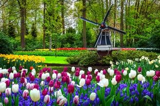 PROMO_Keukenhof Gardens shutterstock_753268144