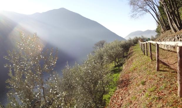 Sentiero_dellolivo_Gandria_28-e1546439959574.jpg